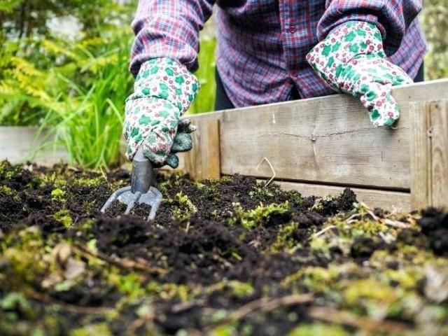 Обязательно хорошо очищайте свои грядки после сбора урожая