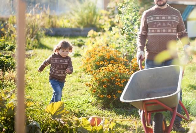 7 советов по подготовке вашего огорода к зиме