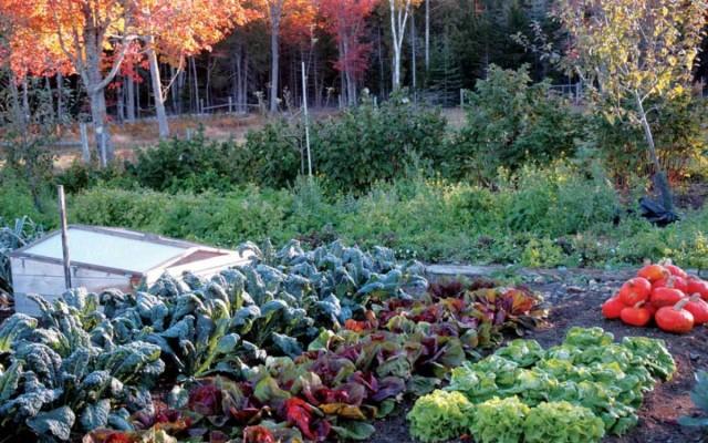 «По горячим следам» запишите, какие растения вы выращивали, какие хорошо прижились и дали много плодов, какой урожай вы собрали