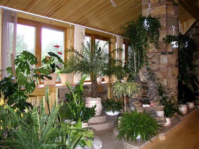 Для устройства комнатных альпинариев и рокариев часто выбирают обычные комнатные растения