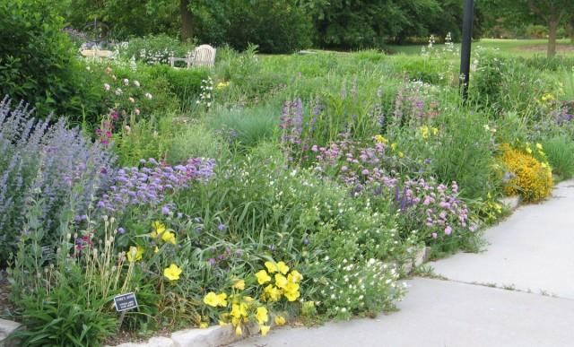 Цветник из жароустойчивых и засухоустойчивых культур можно использовать и как один из вариантов для малоуходного сада