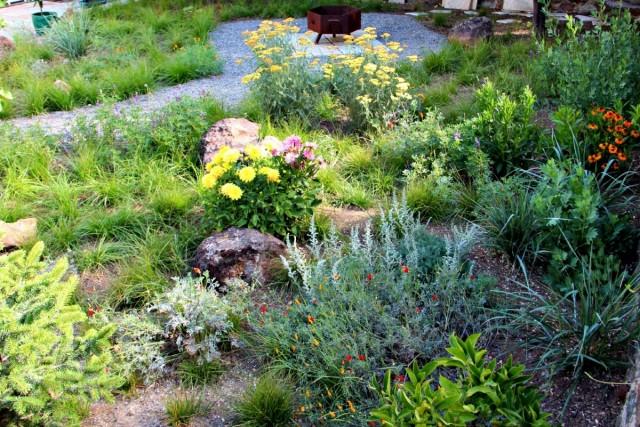 Для высокой декоративности растениям на солнцепёке потребуется уход