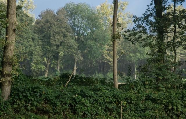 Тёрн - идеален для создания живых изгородей