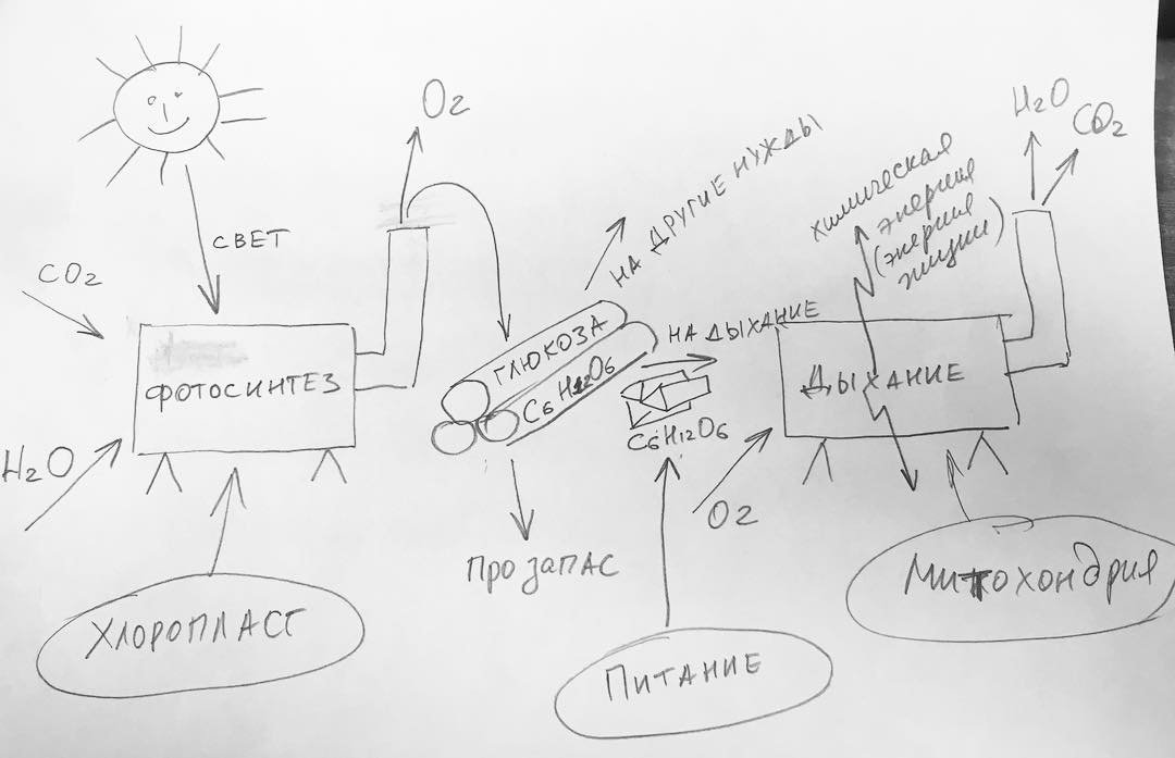 Pitanie-dyihanie-fotosintez