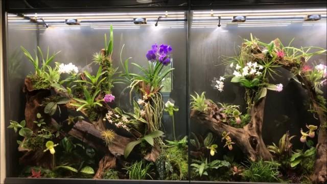 Орхидариум - самый простой вариант ввести орхидеи даже туда, где вовсе нет окон