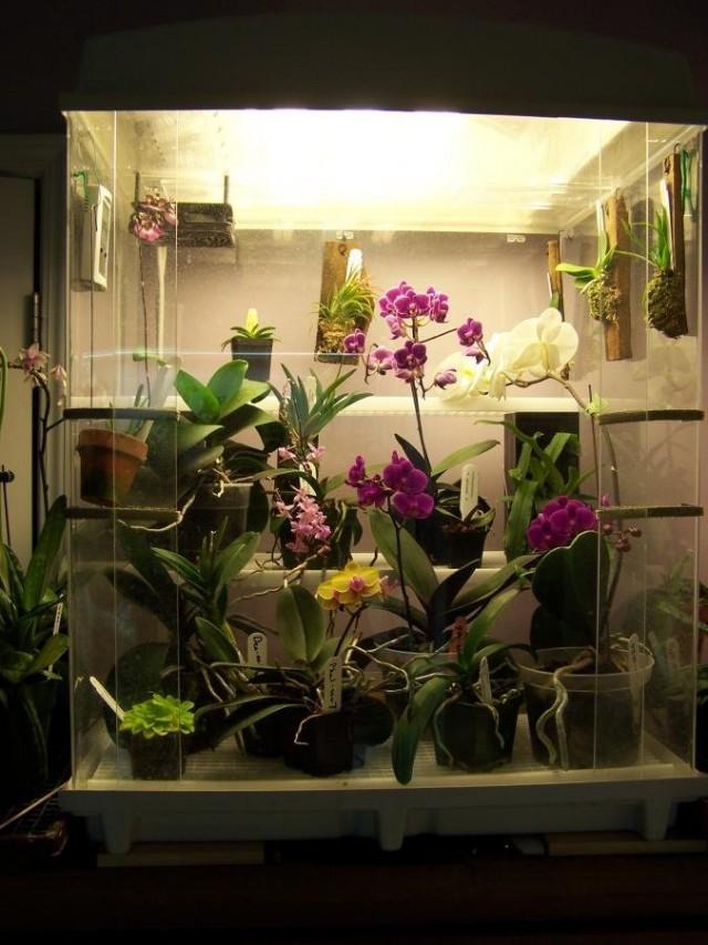 В «многоуровневых» моделях орхидариумов можно выращивать любые из комнатных орхидей - и самые редкие, и довольно типичные для жилых помещений, но капризные