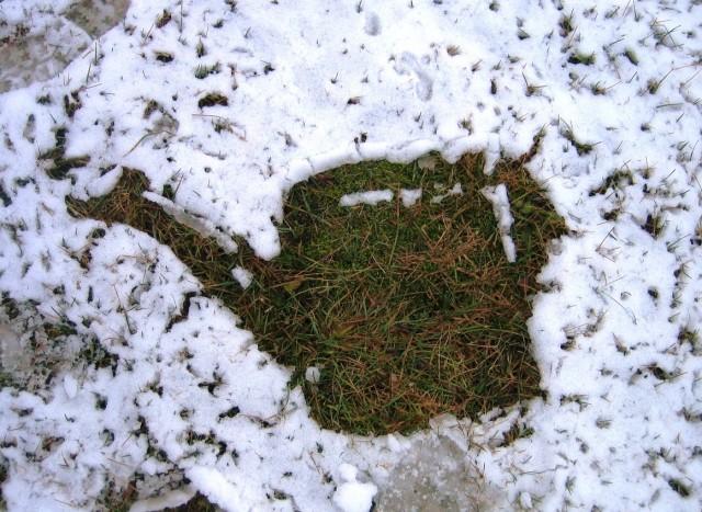 Влагозарядковый полив помогает растениям пережить зиму и порадовать хозяев высоким урожаем в следующем сезоне