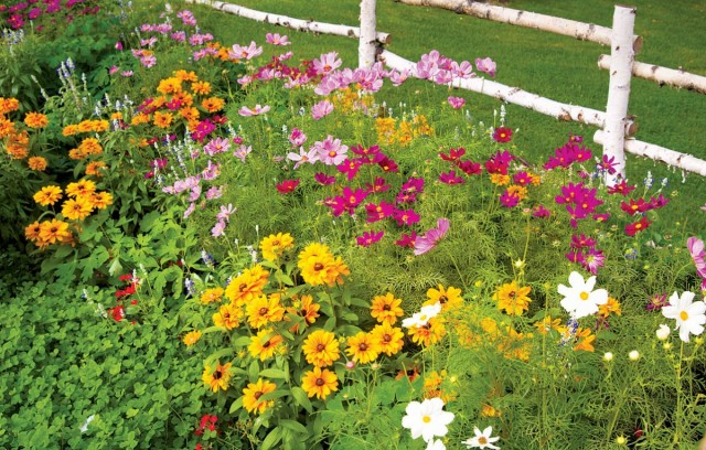 Под зиму можно сеять летники, двухлетние и многолетние цветы
