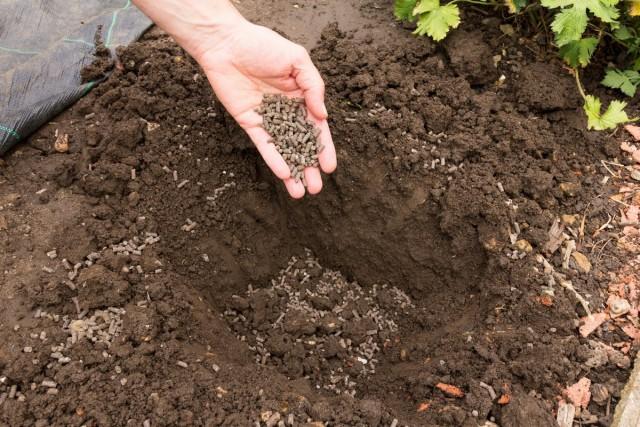 Сухое удобрение удобно вносить осенью под весенние посадки