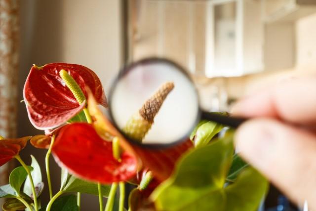 Погибает комнатное растение — 8 возможных причин