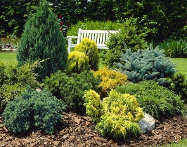 Мульчирование почвы - обязательный элемент для цветника с хвойными