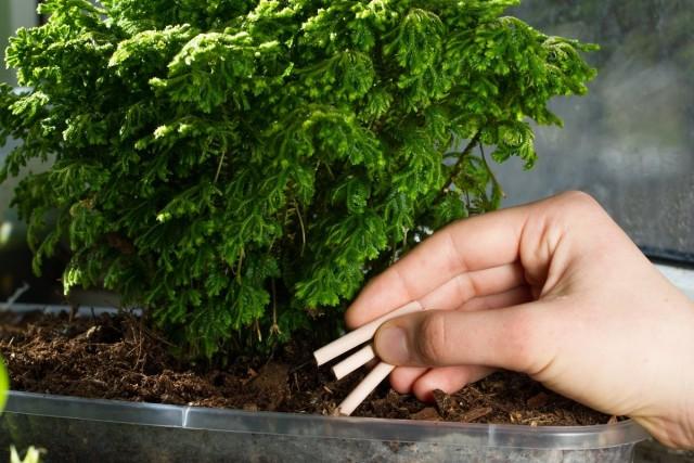 Удобрение для комнатных растений в палочках