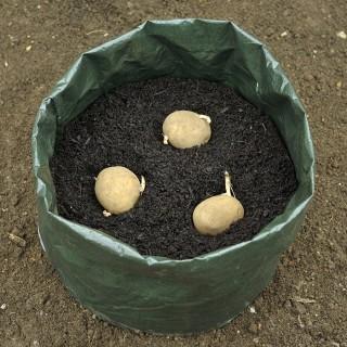 Картошку можно выращивать даже в полиэтиленовых мешках