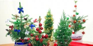Живые хвойные растения вместо новогодней ёлки