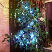 В качестве новогодней ёлки можно нарядить фикус Бенджамина