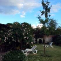 Гинкго Билоба - двадцатилетнее деревце