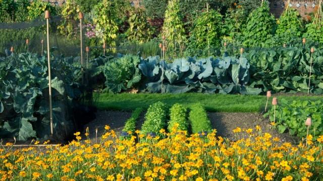 Правильный севооборот помогает в разы уменьшить трудозатраты огородника
