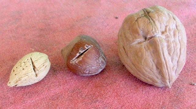 Скарификация - нарушение целостности оболочки семени