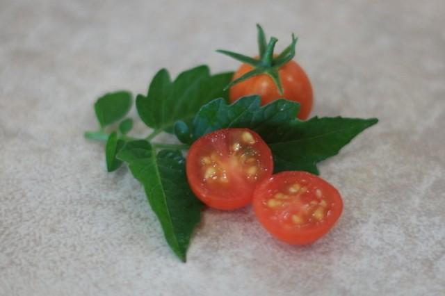 Сорт томатов «Вишневый водопад»
