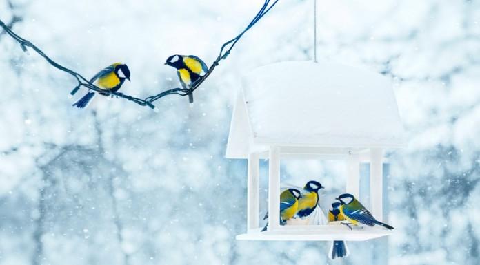 Зимний сад в январе
