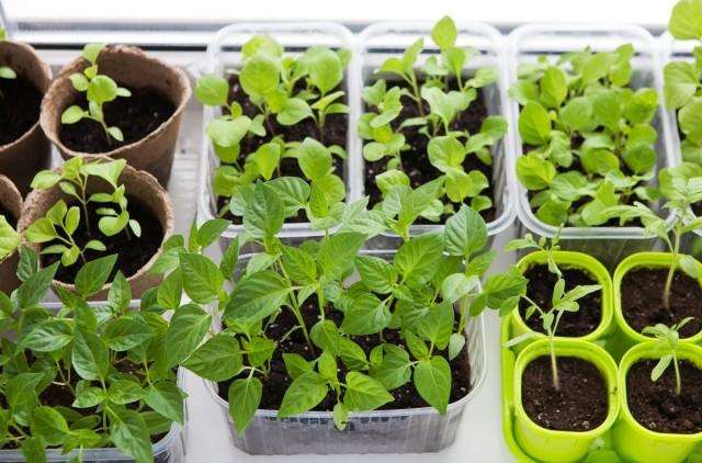 Выбираем правильную ёмкость для выращивания рассады