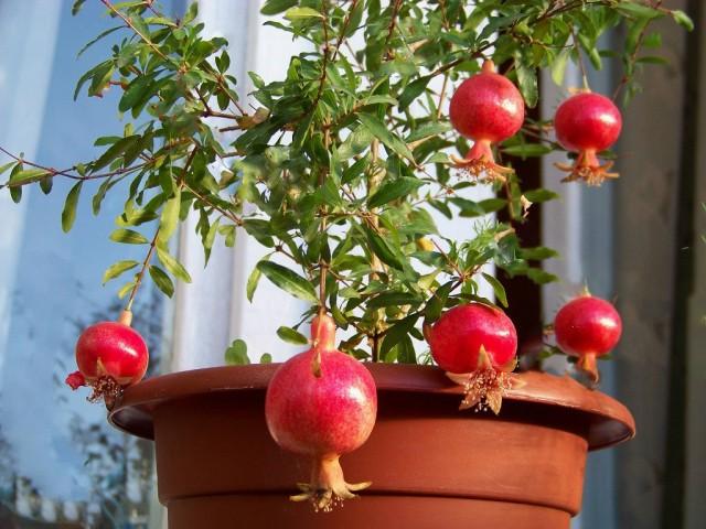Какие цветы выращивать в домашних условиях?