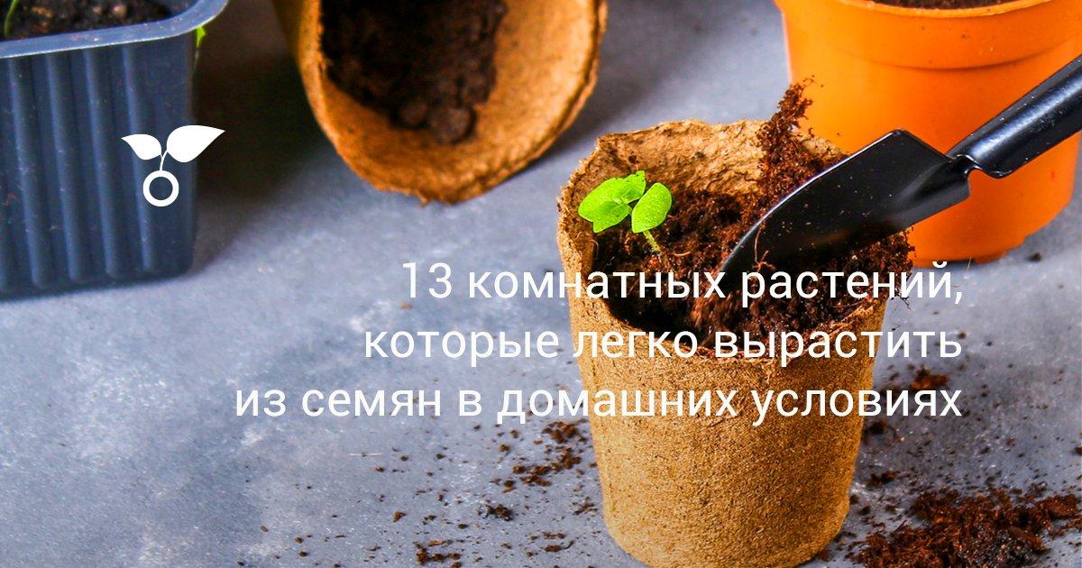 Семена горшечных растений