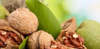 Как вырастить грецкий орех из орешка