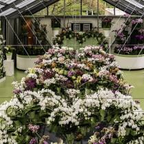 Сами по себе павильоны Кёкенхоф представляют обширную выставку различных цветов