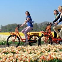 На велосипеде можно прокатиться вдоль цветущих полей и полюбоваться незабываемыми пейзажами Кёкенхофа