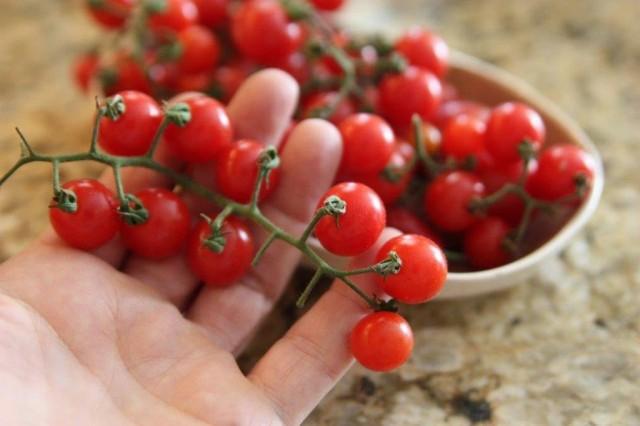 Миниатюрная форма томата - это возвращение к позабытым корням