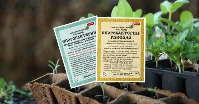 Как защитить рассаду от болезней