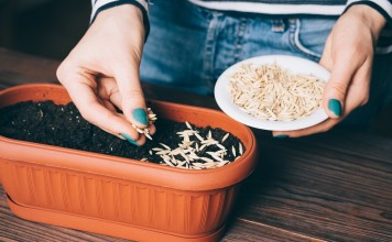 Как определить всхожесть семян?
