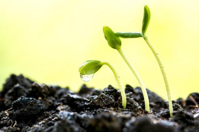 В лёгкой и рыхлой почвенной смеси маленьким корешкам будет проще и легче разрастаться