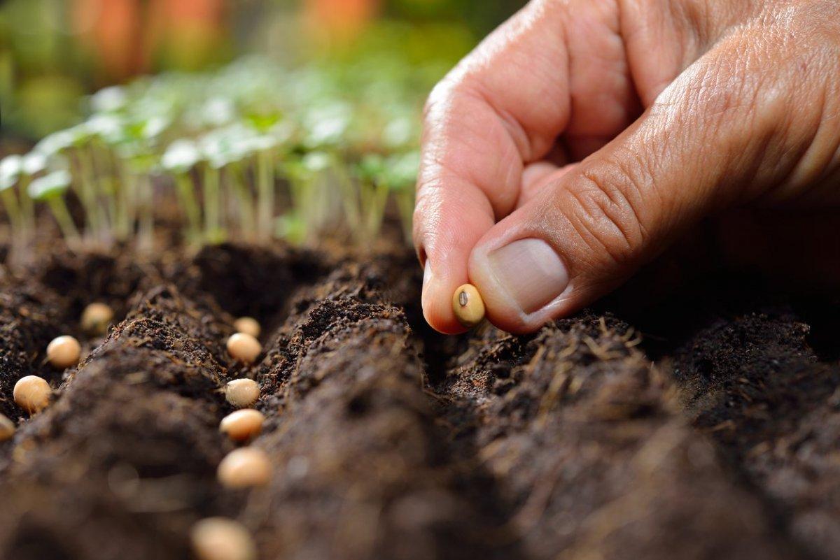 посадить семя картинка облик
