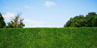 5 лучших растений для создания живых изгородей, защищающих от пыли