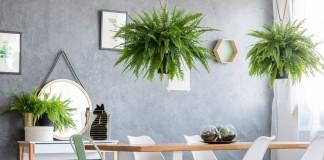8 самых эффектных комнатных папоротников
