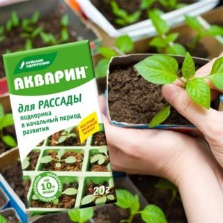 Как вырастить здоровую рассаду?