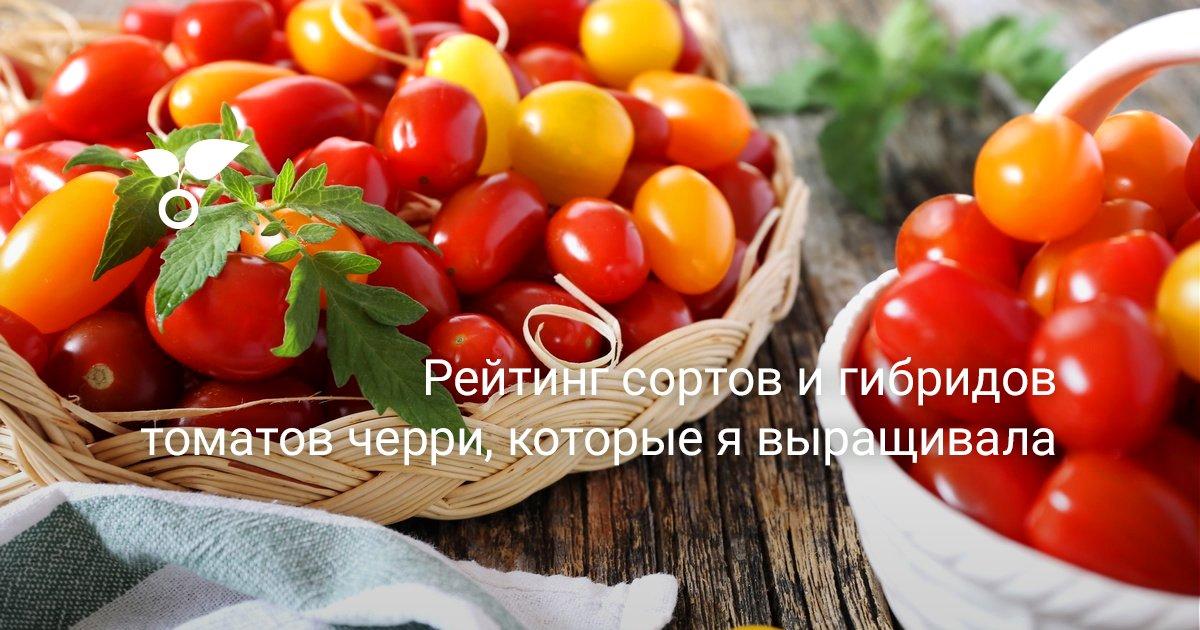 Томат черри красный характеристика и описание сорта мнение садоводов с фото