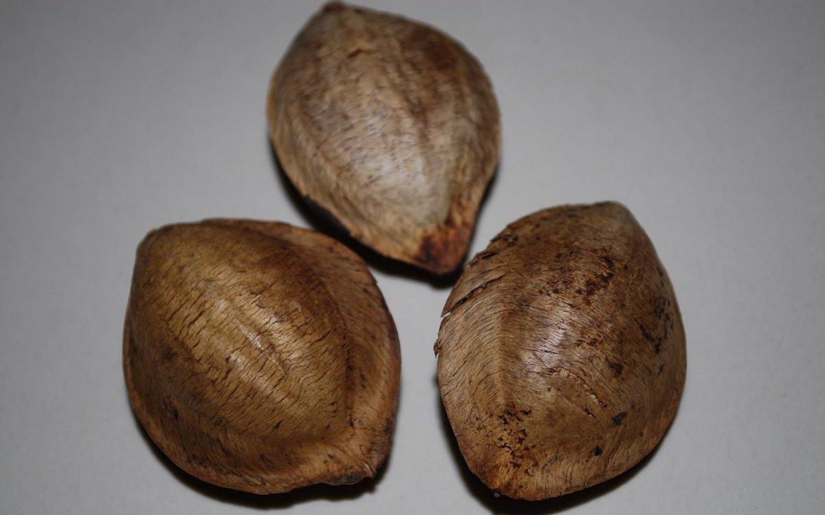 tropical-almond-3