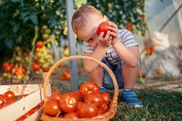 Чем отличаются индетерминантные и детерминантные томаты?