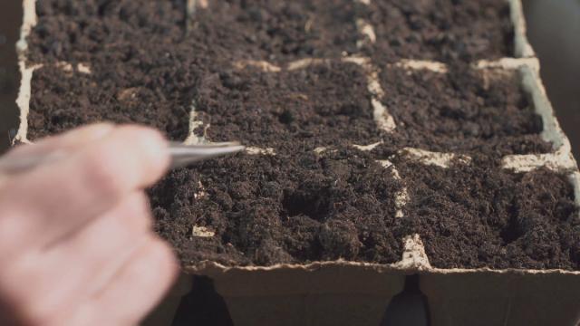 Чтобы избежать гибели рассады томатов от черной ножки, обязательно проведите обеззараживание грунта