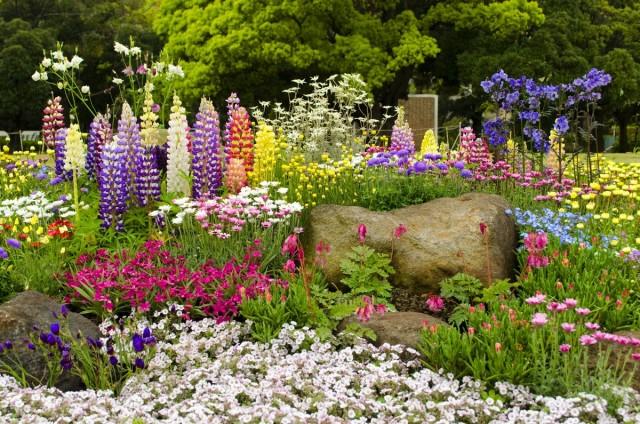 10 самых неприхотливых многолетних цветов