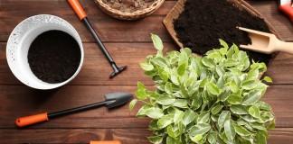 5 главных правил пересадки комнатных растений весной