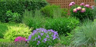 5 самых неприхотливых многолетников для палисадника, цветущих весной