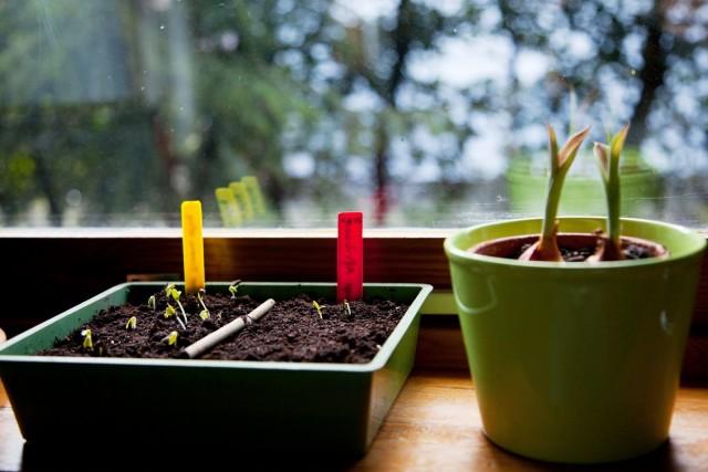 6 ошибок цветовода, или Почему не всходят семена?