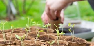 Здоровая и крепкая рассада – это залог качественного урожая