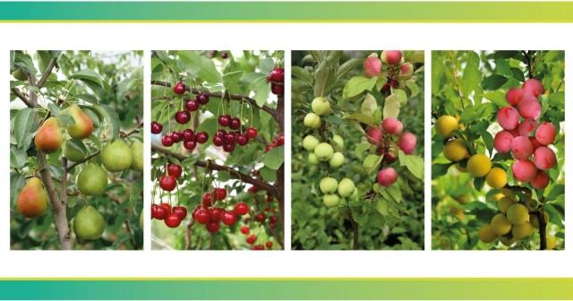 С практической точки зрения «многосортовые» деревья обладают целым рядом несомненных преимуществ
