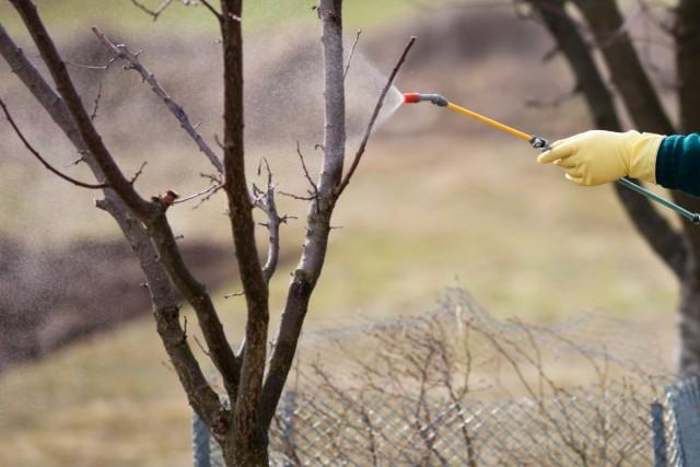 Обработка деревьев и кустарников раствором железного купороса задерживает распускание почек примерно на 5-7 дней