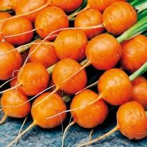 Морковь «Парижская каротель»